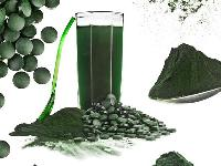 Development of a Spirulina Industry – Production